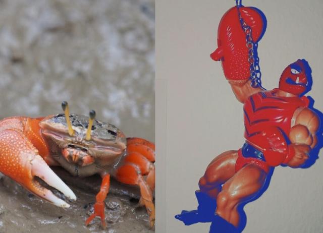 crab_clawful-kopie
