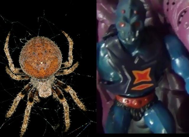 spider_webstor-kopie